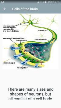 Anatomy Of The Human Brain screenshot 3