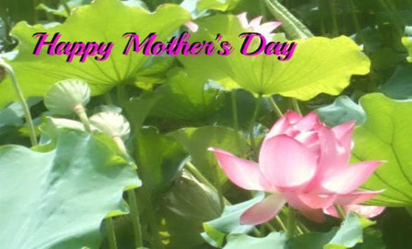 Mother's Day Card apk screenshot