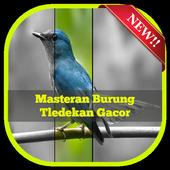 Masteran Burung Tledekan Gacor icon
