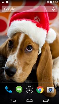 Christmas Dog Live Wallpaper poster