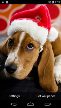 Christmas Dog Live Wallpaper screenshot 1