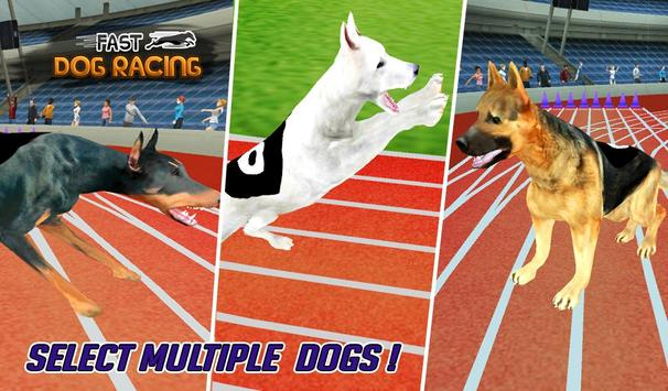 Fast Dog Racing 3D poster