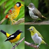 Icona Uccelli Memory Game