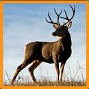 Deer Memory Game APK