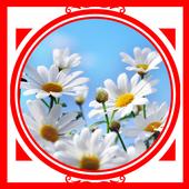 Daisy Ideas icon