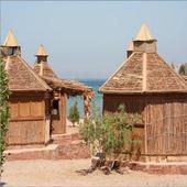 Sinai Camps icon