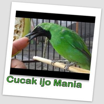 Cucak ijo Kicau Burung MP3 poster