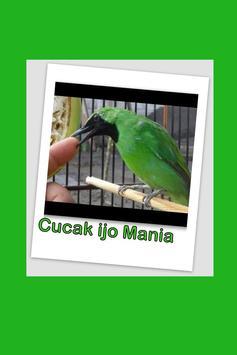 Cucak ijo Kicau Burung MP3 screenshot 1