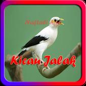 Kicau Burung Jalak Offline icon