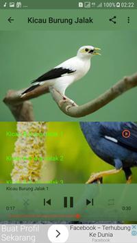 Kicau Burung Jalak Offline screenshot 2