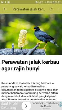 Kicau Burung Jalak Offline screenshot 5