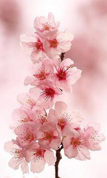 Puzzles Flower Sakura screenshot 2