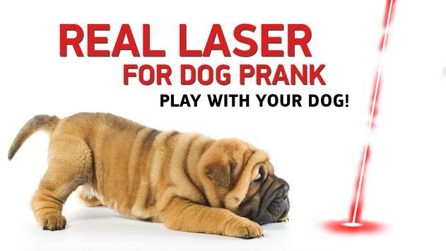 Real laser for dog prank poster
