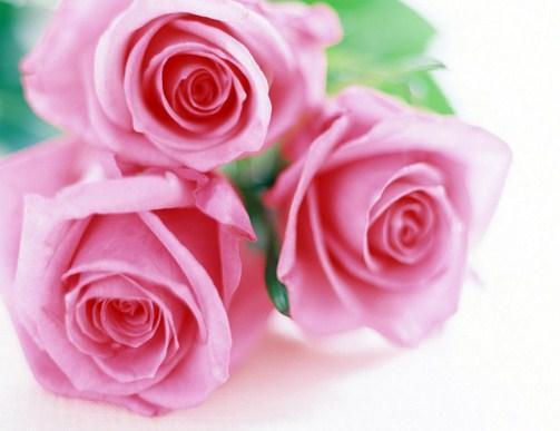 Unduh 7700 Gambar Bunga Mawar Yang Cantik Dan Indah Gratis