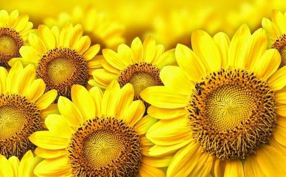 type sunflower screenshot 1
