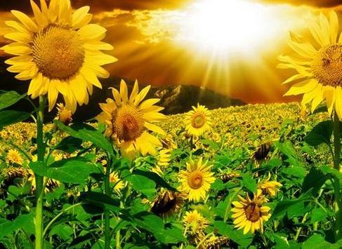 type sunflower screenshot 8