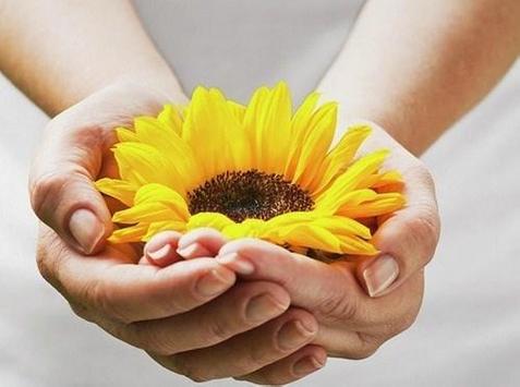 type sunflower screenshot 9