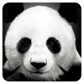 Animal Gallery icon