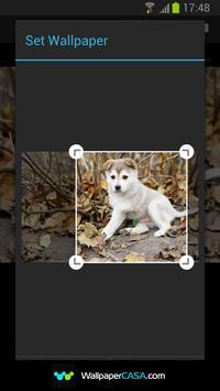 Animal Gallery screenshot 5