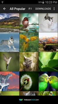 Animal Gallery poster