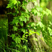 nature green wallpapers icon