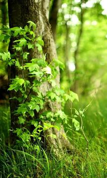 nature green wallpapers poster