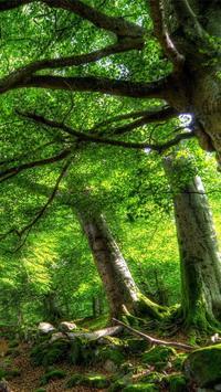 Nature Live Wallpaper Free apk screenshot