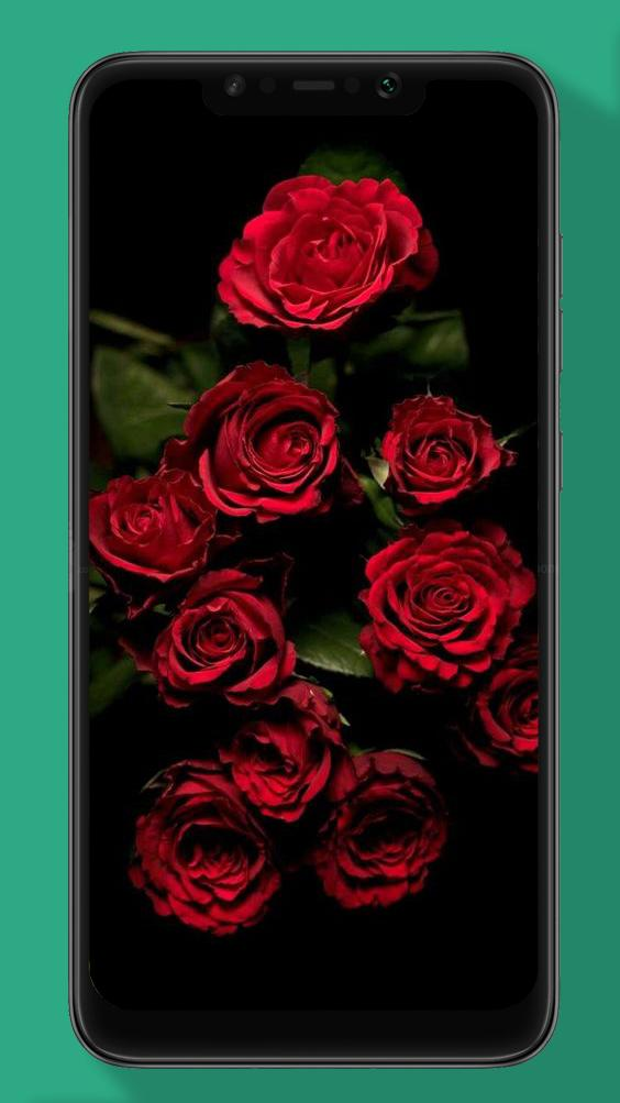 Rose Wallpaper Floral Flower Background Hd For Android