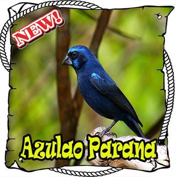 Cantos da Azulao Parana Brasilio Mp3 poster