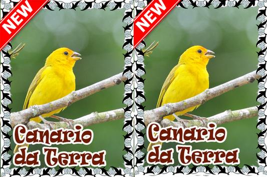 Cantos Canario da Terra Mp3 apk screenshot