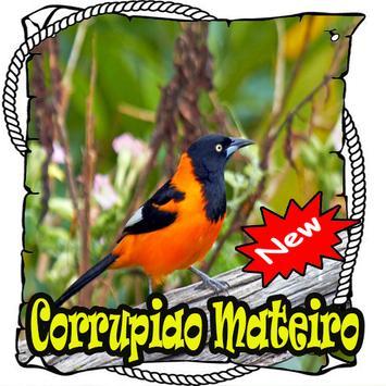 Canto de Corrupiao Mateiro Brasilios Mp3 poster