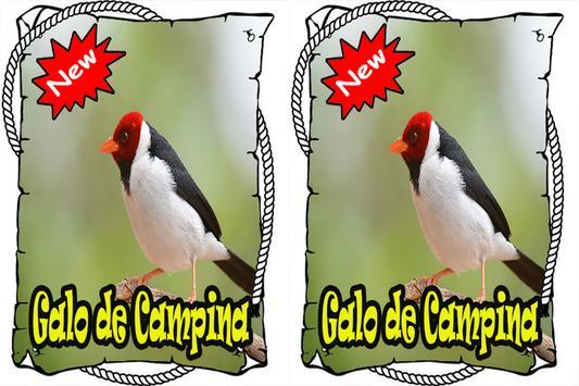 Cantos Galo da Campina Mp3 apk screenshot