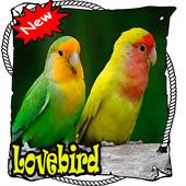 Master Lovebird Lutino Terbaik  dan Terbaru Mp3 icon