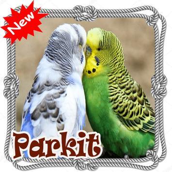 Suara Burung Parkit Terbaik Dan Terbaru Mp3 poster