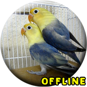 Suara Burung Lovebird Kawin MP3 icon