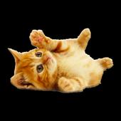 Cute Kittens HD icon