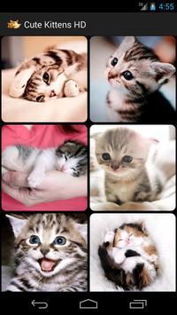 Cute Kittens HD poster