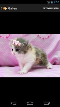 Cute Kittens HD apk screenshot