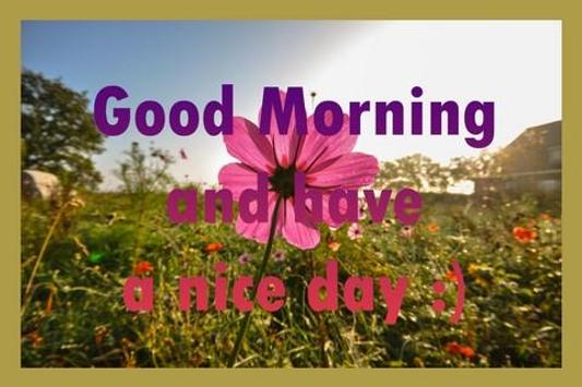 Good Morning Cards For Android Apk Download