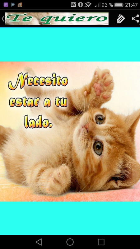 Gatitos Con Frases De Amor For Android Apk Download