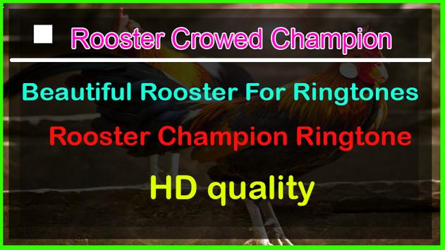 Rooster Crowed Champion Ringtone screenshot 1