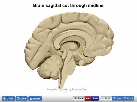 NeuroSketch screenshot 3