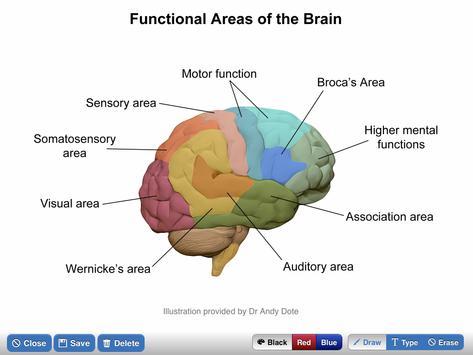 NeuroSketch screenshot 4