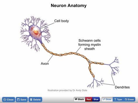 NeuroSketch screenshot 5
