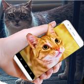 Cat On Mobile Screen Fun icon