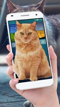 Cat On Mobile Screen Fun poster