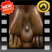 Funny Animal 2 icon