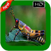 New Insect Photo Frames icon