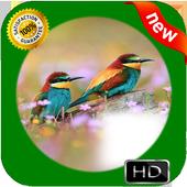 New Bird Photo Frames icon