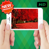 Beautiful Red Leaves icon